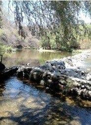 rancho acuífero y ganadero en tejupilco edo de mex 62 has.