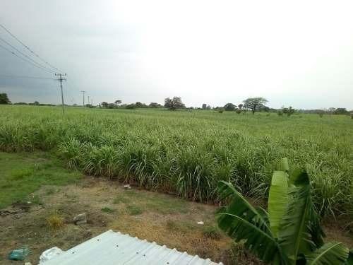 rancho agrícola cañaveral, de gran tamaño en función