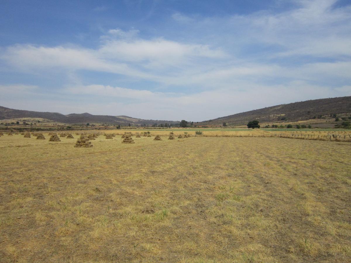 rancho agrícola ganadero excelente inversión 111 ha 2 pozos