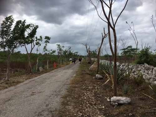 rancho con cenote en venta, 43 hectárias en telchac pueblo. a 30 min de mérida