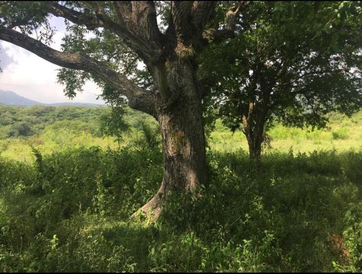 rancho de 80 hectáreas en venta en alto lucero, veracruz