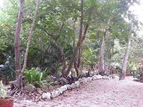 rancho de una hectarea listo para trabajar, a 15 mn de tulum