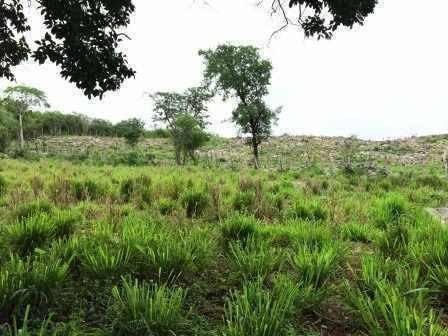 rancho en cantamayec, rancho ganadero
