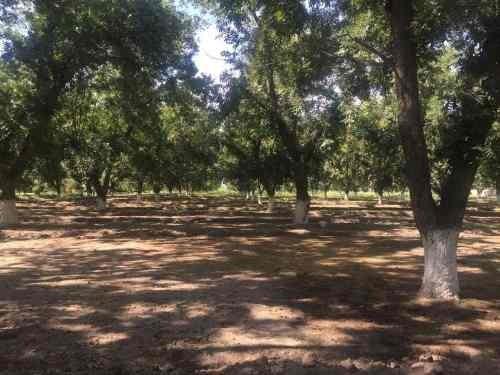 rancho en venta ejido la popular