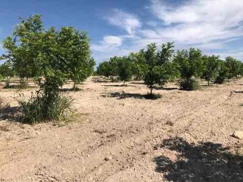 rancho en venta el alamo