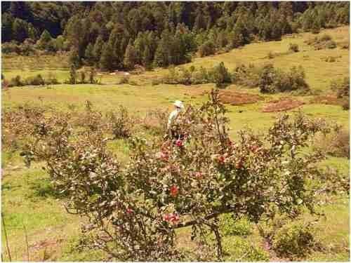 rancho en venta en el estado de hidalgo