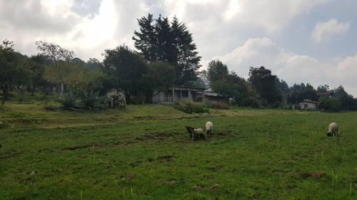 rancho en venta en el trompillo