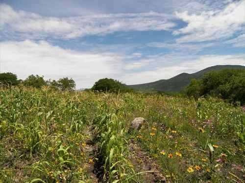 rancho en venta en jalpa, san miguel de allende gto