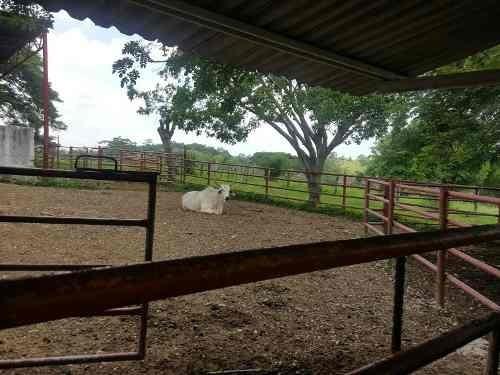 rancho en venta san juan el alto 1ra secc