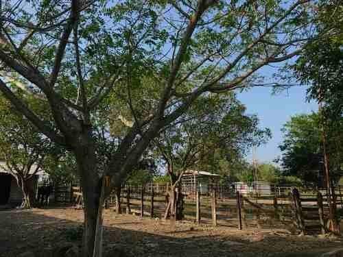 rancho en venta tampico alto, ver