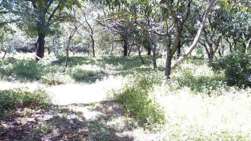 rancho  en xoxocotla / puente de ixtla - grb-412-ra