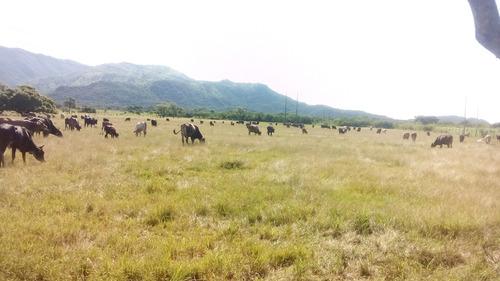 rancho ganadero