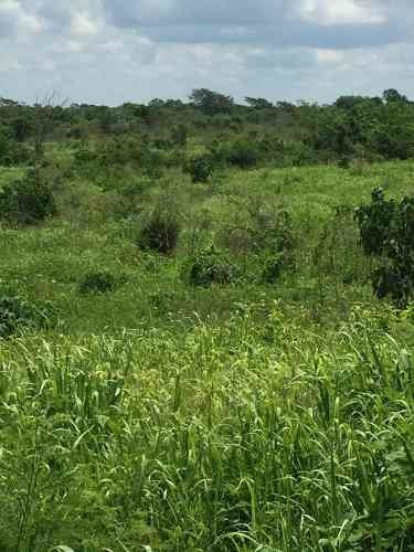 rancho ganadero de 240 hectáreas situado en el municipio de cenotillo, dentro de la zona.