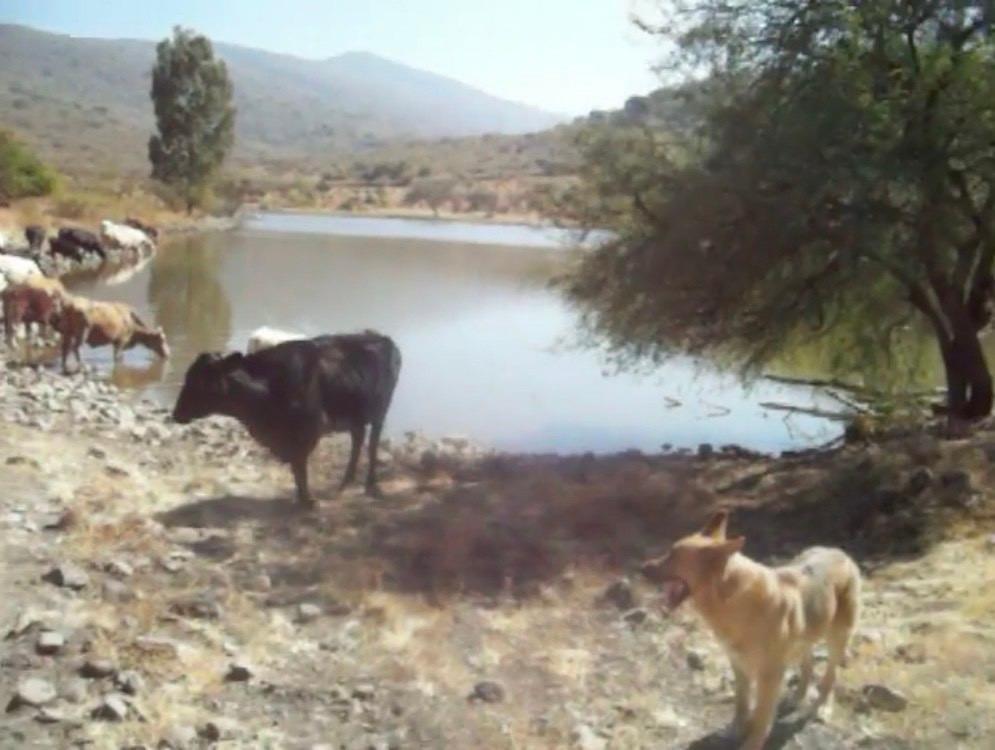 rancho ganadero de caceria