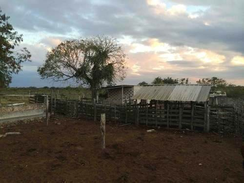 rancho ganadero en dzilam gonzález, yucatán, méxico.