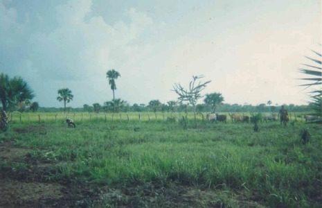 rancho ganadero en venta, en generalísimo morelos, carmen