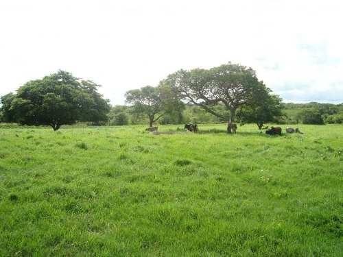 rancho ganadero en venta, ozuluama, veracruz