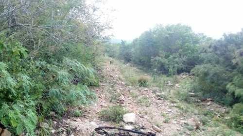 rancho ganadero venta 4,400 hectareas linares nuevo leon