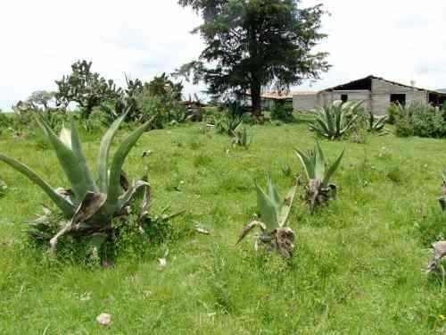 rancho ideal para ganadería y agricultura, con mucha agua