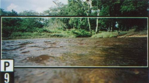 rancho  las 4 jotas  (tenosique, tabasco): terreno agrícola y ganadero a 20 km tenosique.