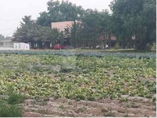 rancho los nopalitos en venta en tecamac, estado de méxico, funcionando es un criadero avestruz.