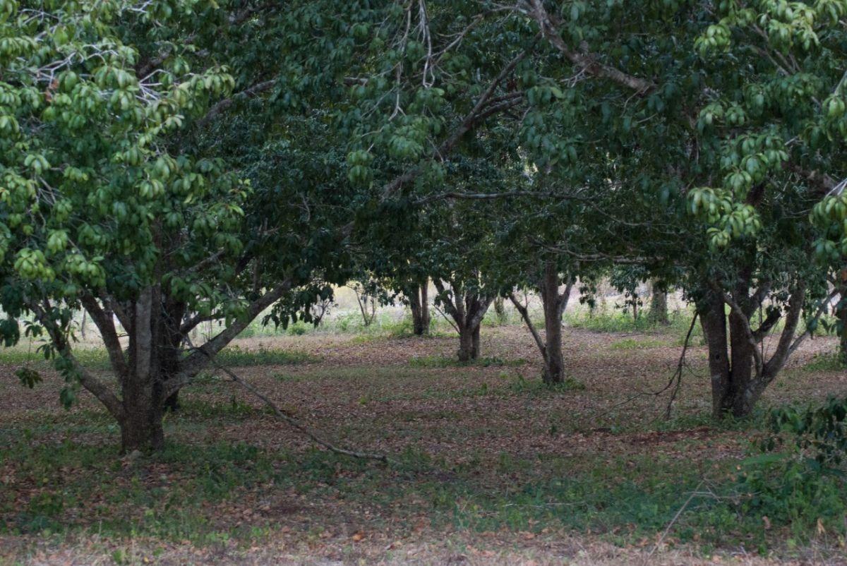 rancho san antonio xkix en venta en pocyaxum campeche