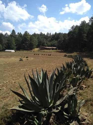 rancho/finca en venta.