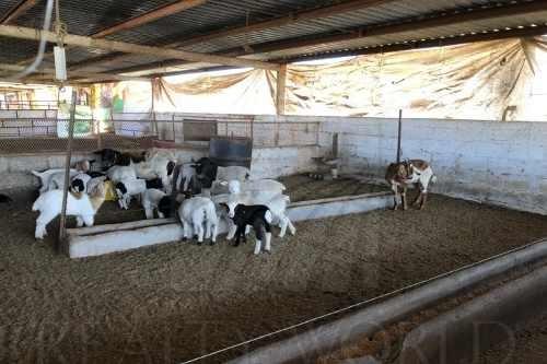 ranchos en venta en gral. escobedo, montemorelos
