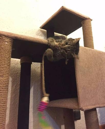 rascador casa, arbol para gato