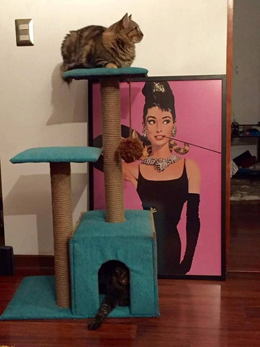 rascador casa, cama para gato