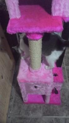 rascador casita para gatos todo madera y peluche premium
