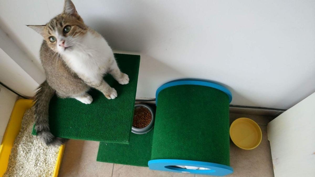 Rascador Para Gatos Con Tarima Cama Escondite Modelo Treo - $ 1.399 ...