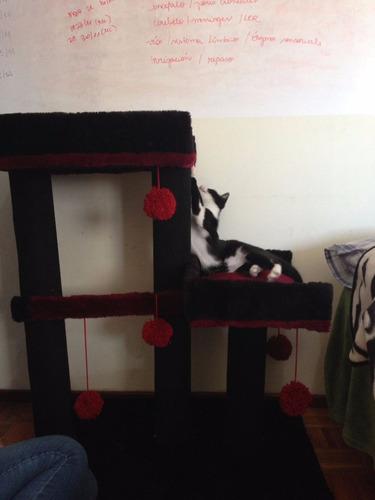 rascadores gimnasio para gatos (eden gatuno) doble xl