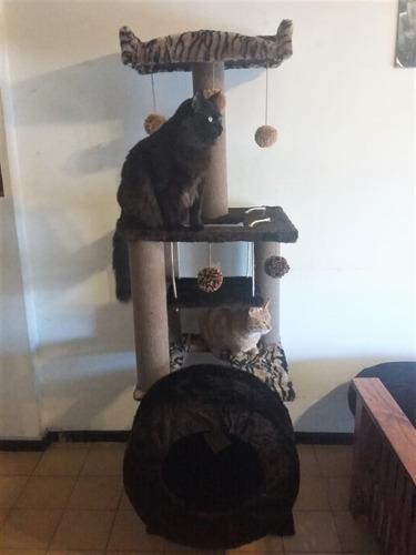 rascadores gimnasio para gatos (eden gatuno) torre c/ rueda