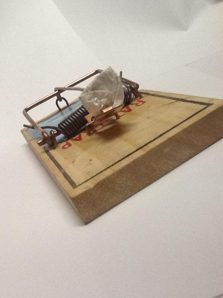 Como hacer trampas para ratas gallery of asegrese de - Como acabar con los ratones en casa ...