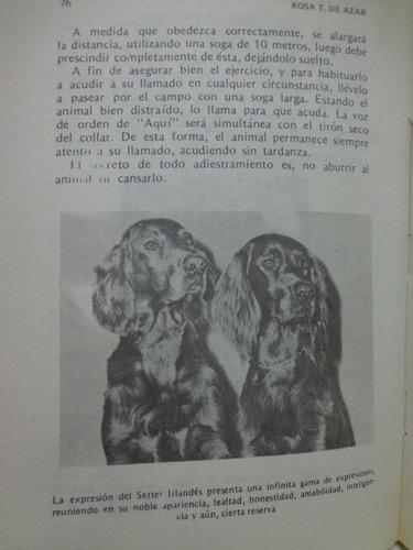 raza perros setter irlandes