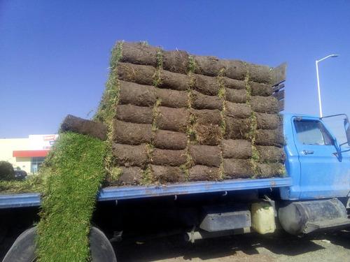 realizamos colocación de pasto en rollo y diseños d jardines