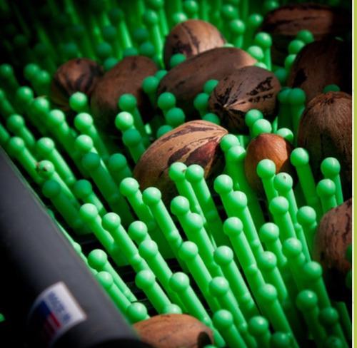 recolector / cosechador nueces pecanes almendras avellanas
