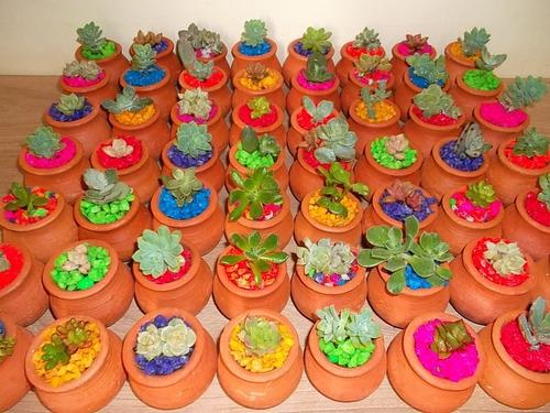 recordatorios naturales con suculentas y cactus medellín