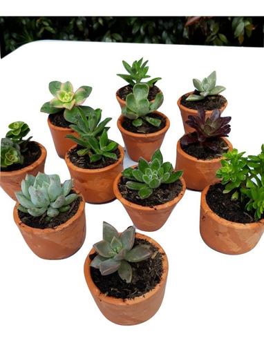 recordatorios regalos suculentas plantas matero 5 cms