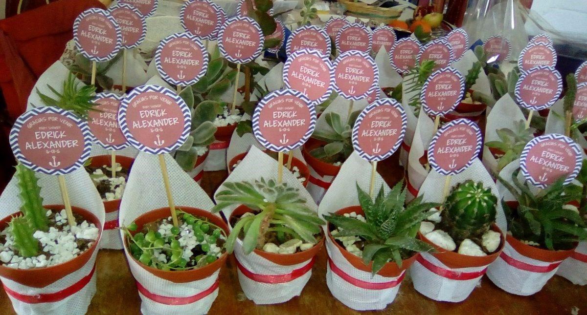 Recuerdos bautizo plantas suculentas en mercado for Decoracion con plantas suculentas