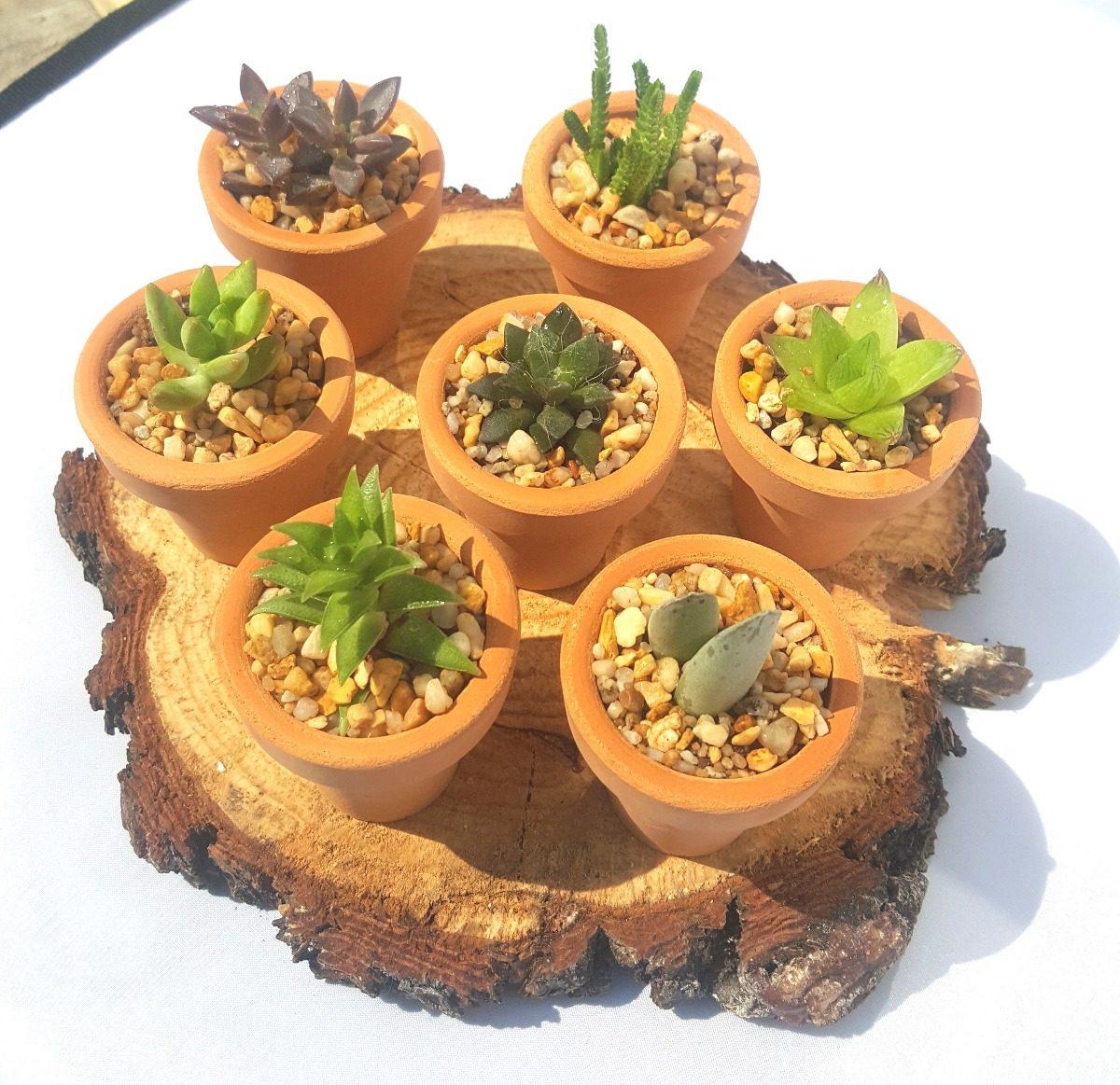 Recuerdos bautizo plantas suculentas cactus miniatura for Decoracion con plantas miniatura