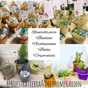 Recuerdos De Bautizo Con Cactus.Recuerdos Con Cactus Y Soculentas