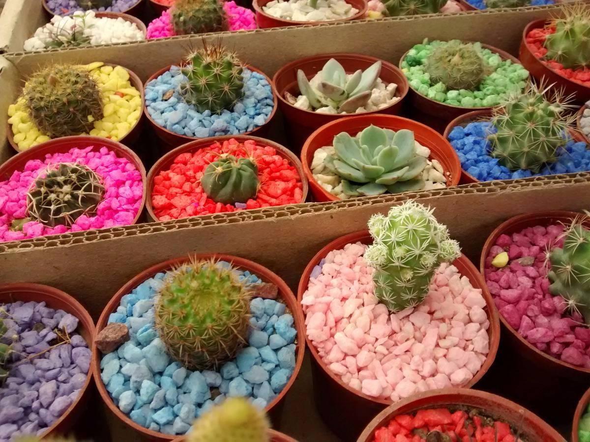 Recuerdos ecol gicos plantas peque as y cactus s 3 80 for Vivero de cactus