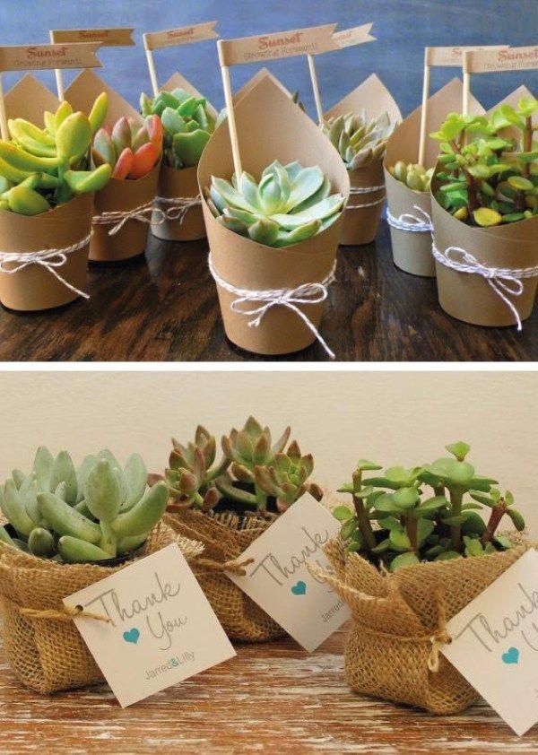 Recuerdos macetas suculetas cactus s 2 00 en mercado libre - Plantas pequenas para regalar boda ...