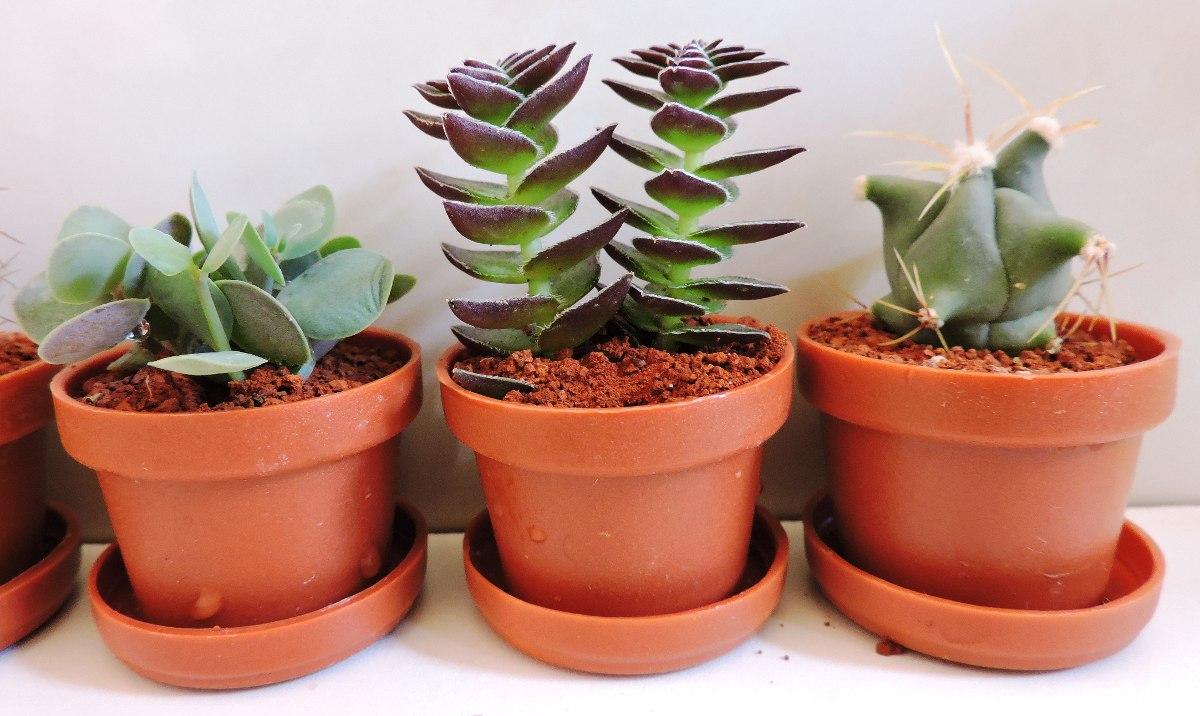 recuerdos primera comunin plantas miniatura ecofriendly