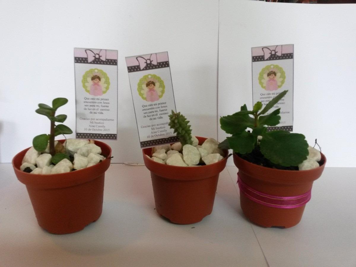 Recuerdos primera comuni n plantas suculentas en mercado libre - Plantas pequenas para regalar boda ...