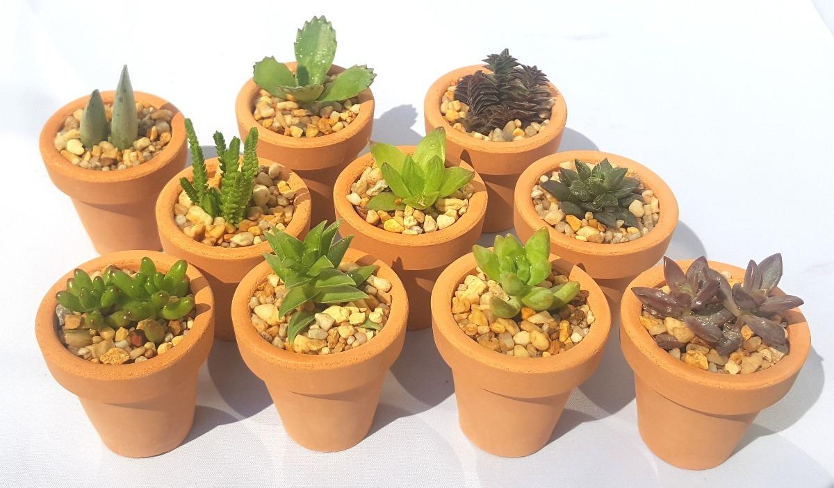 Recuerdos xv a os 15 a os plantas suculentas cactus for Decoracion con plantas suculentas