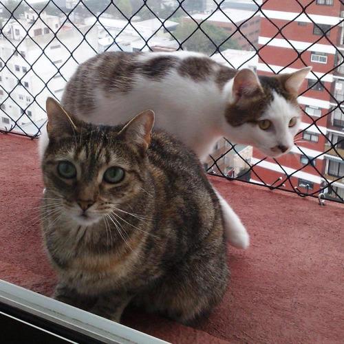 red negra fuerte trenzada seguridad bebe gatito gatos perros