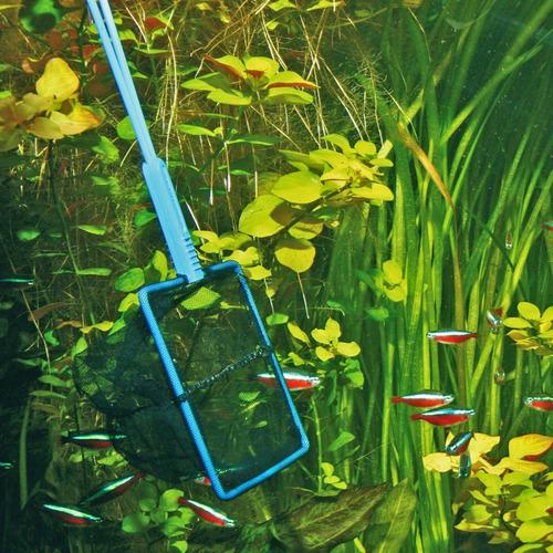 rede para peixes aquários
